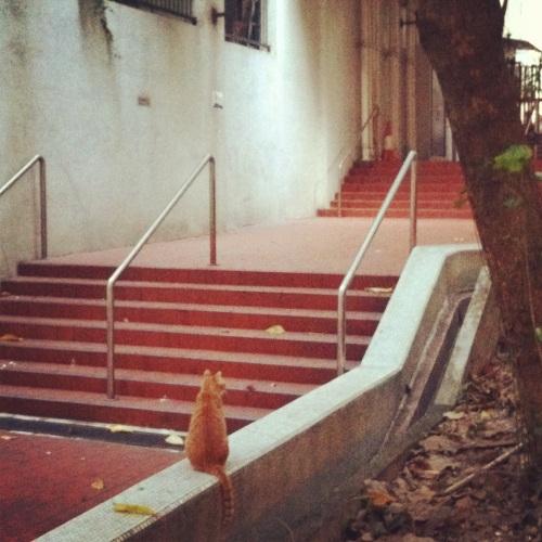 Cats I